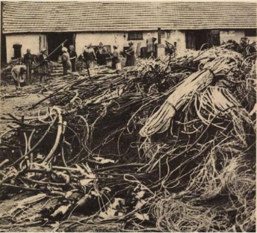 1979 Nagykónyiak a Koppányszántói kábelnyúzóba