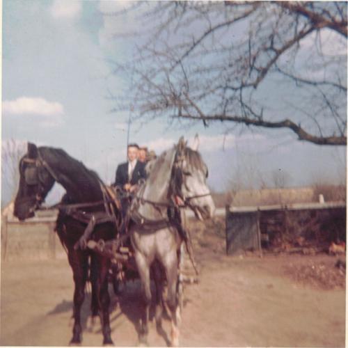 beszolgáltatott lovak001