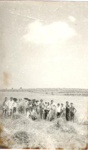1962 aratás